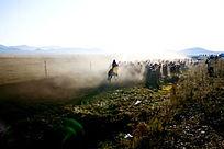 塞罕坝大草原正在转场的牧民马群