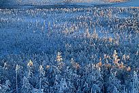 大兴安岭林海冬雪