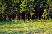 大兴安岭松林。