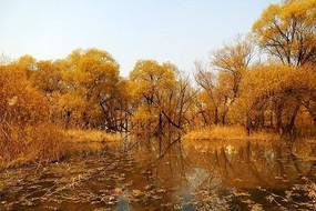 金色的柳树湾湿地风光