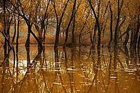 金色迷人的柳树湾美图
