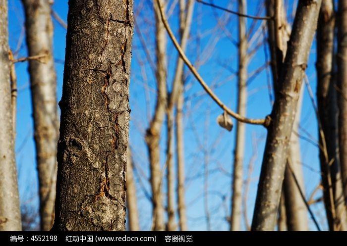 蓝天下的树木林