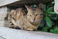 蹲在栏杆上的猫猫