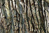 粗糙的树皮底纹肌理