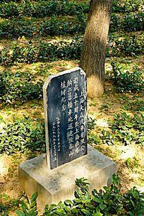 泰山茶园内的纪念石碑