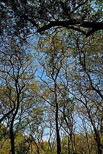 泰山林场高清大图