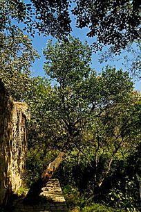 泰山山林林场茂密的树林植被