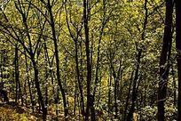 泰山深处的树林林场