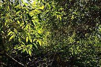 泰山深处丰富的树木林场