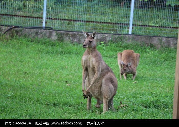 跳得最高最远的哺乳动物