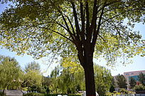阳光下茂密的大树
