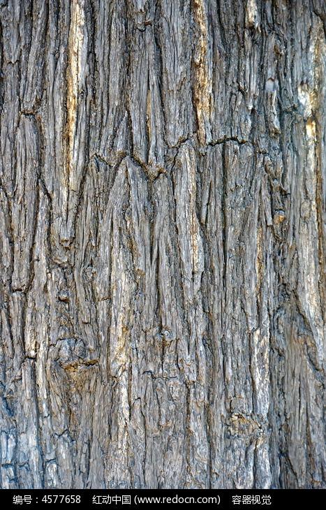 粗糙树皮纹理底纹