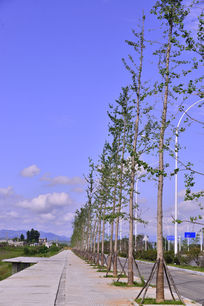 道路边上的风景树