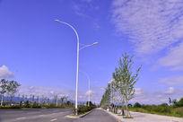 道路边上的路灯和树
