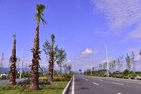 道路边上风景树