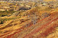 黄岗梁林场山地风景
