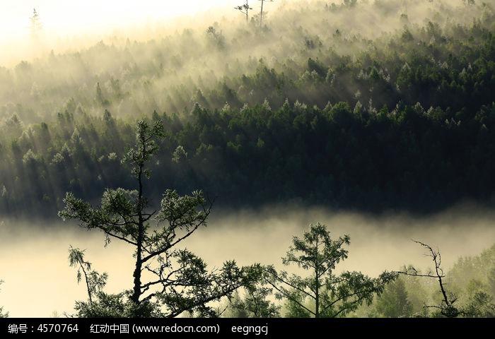 山林雾色图片