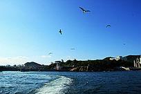 海景 海鸥 海海滩 岛屿