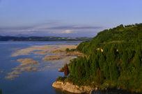 汉江河里的水草