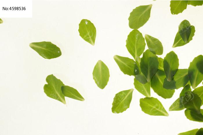 原创摄影图 动物植物 树木枝叶 绿色树叶高清大图  请您分享: 素材