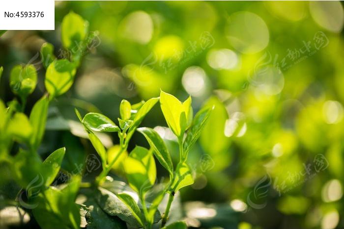 绿色树叶植物图片,高清大图_树木枝叶素材