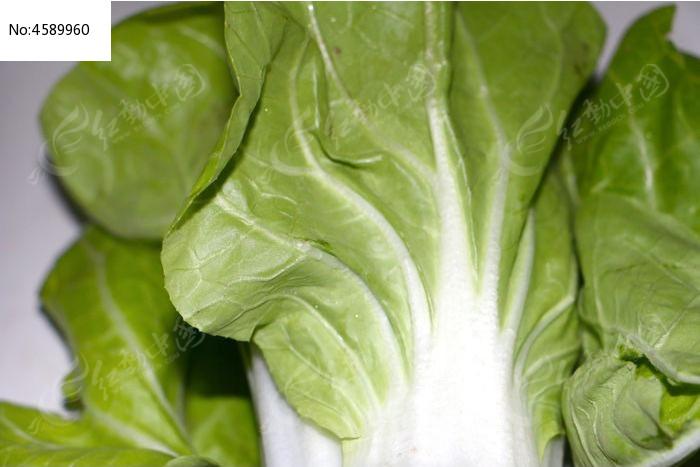 绿色小白菜图片,高清大图_水果蔬菜素材