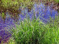 湿地湖泊草丛
