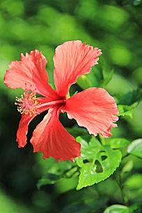 枝头上的大红花