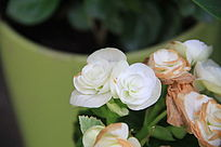 枝头上的小白花