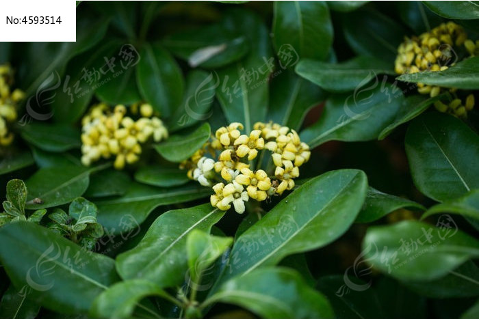 黄花小花绿叶植物图片