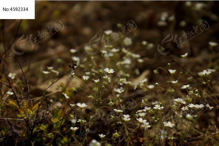 原创摄影图 动物植物 花卉花草 土地上的白色小碎花