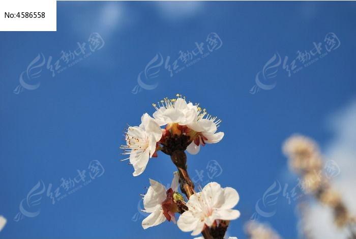 原创摄影图 动物植物 花卉花草 鲜花蓝天白云