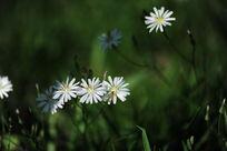 阳光下的小白花