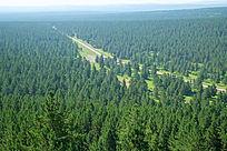 亚洲最大的沙地樟子松原始森林