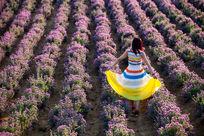 薰衣草园中的少女