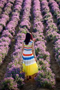 走在薰衣草园的美女