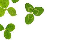白背景上的绿色叶片纹理大图