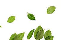 白色背景上的绿色树叶