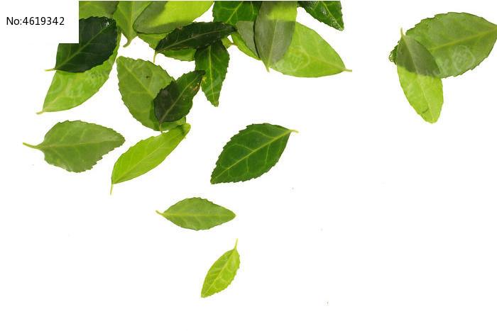 原创摄影图 动物植物 树木枝叶 碧绿的树叶