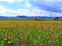 草原的野大烟花