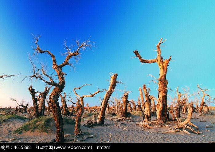 额济纳怪树林