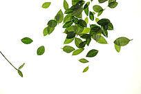 高清拍摄绿色树叶大图