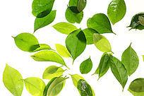 高清拍摄绿色树叶高清大图