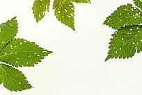 高质感拍摄绿色树叶