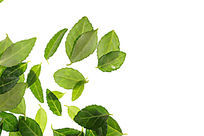 高质感拍摄绿色树叶纹理