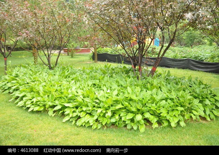 公园里的树木和叶丛图片