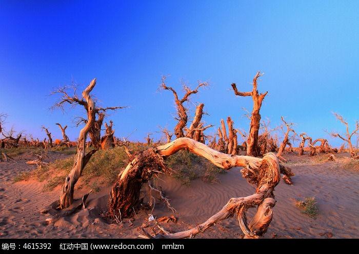 怪树林苍凉之美