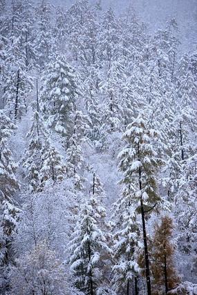 金秋山林雪景