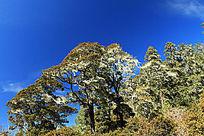 拉普达措森林风景