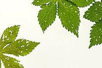 绿色树叶高清拍摄